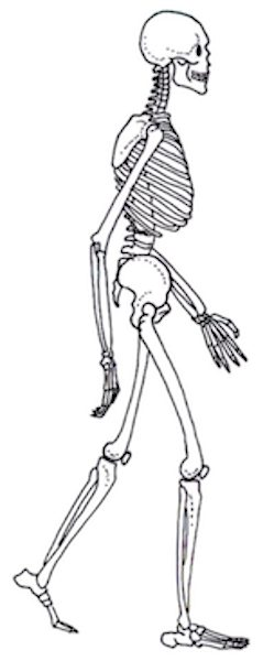 Ebook Skeleton and Structure